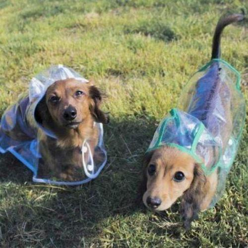 Official Dog Raincoat Transparent